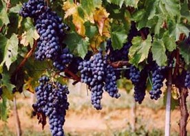 Winery Azienda Bruni