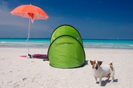 speciale last minute 3 notti bassa stagione sul mare di castiglioncello con il tuo cane!
