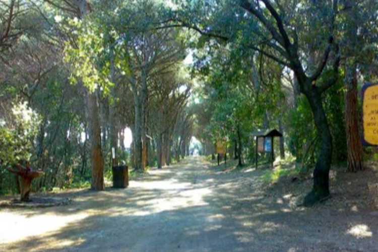 campeggio Arcobaleno Camping Marina di Bibbona