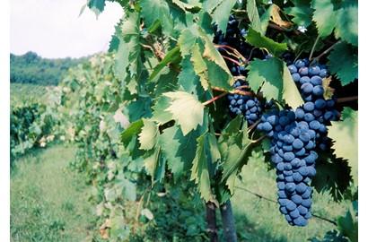 Winery Maremma alta