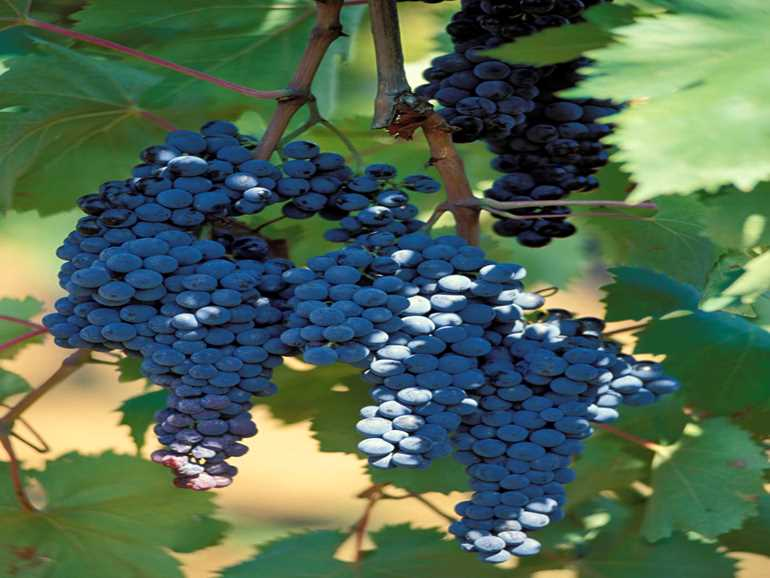 Winery Maremma alta Gavorrano