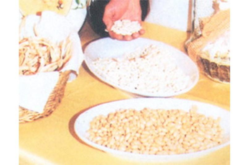 beans sorana