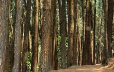 I parchi naturali San Vincenzo