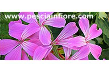 Toscana in fiore