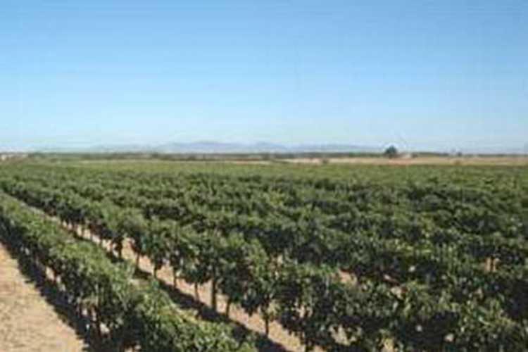 aziende vinicole Azienda Bruni Fonteblanda