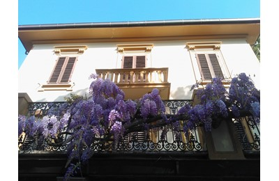 Apartment Villa Violetta
